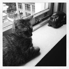 Cats (real and metal) on one of the Healey's wide windowsills. Photo by wcdarling