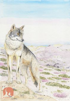 Iberian Wolf, Serra da Estrela, Wolf, Animal and Nature Art Prin https://www.etsy.com/listing/522773134/iberian-wolf-serra-da-estrela-wolf?ref=shop_home_active_37