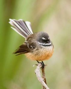 Resources to become a skilled birder! You can recognise birds by their colour, shape, size and flight pattern. Wild Animals Pictures, Bird Pictures, Animal Pictures, Extinct Birds, Bird Facts, Bird Identification, Kiwi Bird, Bird Sculpture, Forest Friends