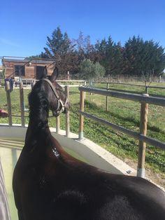Bassin multijets, tendons, ligaments... Shiatsu, Languedoc Roussillon, Horses, Health Club, Plunge Pool, Horse