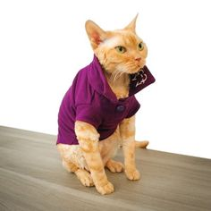 Wesley Polo Purple, $31, now featured on Fab. - LOOK AT THE CAT'S EXPRESSION...LOL