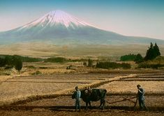 TWO BOYS AND A BULL -- Plowing a Field Near the Slopes of Mt. Fuji by Okinawa Soba, via Flickr