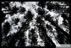 obrazy i inne - fotografia-Drzewa