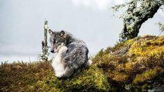 Ao longo da costa do Pacífico na Colúmbia Britânica canadense, vive uma população de lobos marinhos, ou lobos do mar, caninos carnívoros que se distinguem de seus outros parentes principalmente por terem uma dieta pescetariana