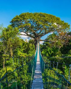 Swinging from the treetops In the prepare to participate in the ultimate jungle adventure. Rainforest Project, Rainforest Plants, Amazon Rainforest Trees, Jungle Life, Ocean Photography, Photography Tips, Wedding Photography, All Nature, Amazing Nature