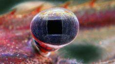 A larva de um Macrobrachium amazonicum (um tipo de camarão de água doce) ampliada 20 vezes. Foto do brasileiro Alex Griman, 11º lugar em 2006
