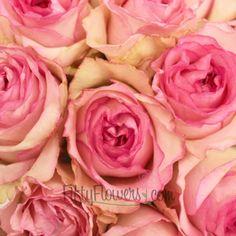FiftyFlowers.com - Bella Vita Pink Swirls White Rose 50 stems @ $109.99 ($2.20 per stem) or 75 roses @ $149.99 per stem ($1.99 per stem) #centerpieceflowers