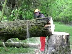 Chainsaw student tries out bucking with a wedge. This fellow was new to saws, and really fell hard for horsepower and throwing chips. Bucking was done beginn. Chain Saw Art, Firewood Logs, Wood Shed, Mountain Man, Chainsaw, Wedges, Artwork, Diy, Tree Structure