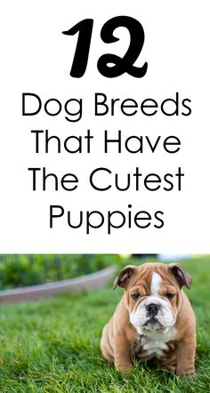 The 12 Dog Breeds That Have The Cutest Puppies http://iheartdogs.com/10-dog-breeds-that-have-the-cutest-puppies/