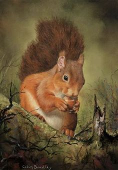 Red Squirrel, Colin Bradley Art, Colin Bradley, SAA Professional Members' Galleries