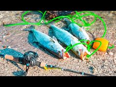 Trout Fishing Tips, Salt, Cooking, Water, Youtube, Kitchen, Gripe Water, Salts, Youtubers