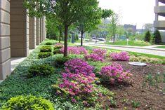 Pink Shrubs Garden Design Buck & Sons Landscape, Inc. Hilliard, OH
