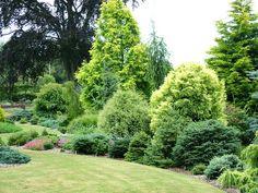 Garden view. Ogród. Rośliny iglaste.