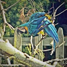In 2012 I was in Spain with my family. We visited Marineland and there was this beautiful parrot.