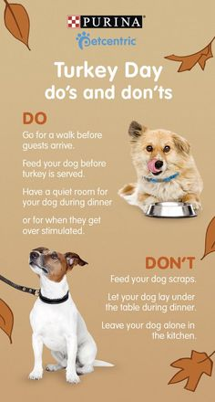 Subscribe to Petcentric's newsletter for more helpful holiday pet tips! Thanksgiving is one of the tastiest holidays of the year, but what makes it so yummy to us isn't always good for dogs. Turkey Day isn't just about the food; with all the family and friends, overstimulation is something to keep an eye on. Planning ahead for possible doggy dangers will help make for a healthier, happier holiday. Brought to you by Petcentric, a Purina brand & your trusted source for helpful tips & fun…