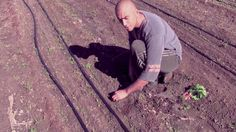 Five years ago, David Solomon abandoned a career in advertising and started working as an apprentice at Escondido based farm La Milpa Organica. Today he is the farm supervisor of Stone Brewing Company's latest venture: Stone Farms.  In this video, David gives advice on how to start growing vegetables in your own garden. Includes a step by step tutorial of planting, watering, weeding, harvesting and composting.How to Start Your Own Vegetable Garden on LibraryYOU: https://libraryyou.escondido.o...