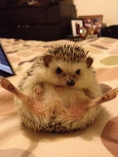 Hedgehog Yoga