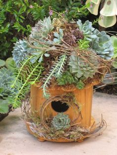 Birdhouse as container...and it's winning the That's so Potted contest so far too!  Not too late to get an entry in.