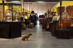 #Mercanteinfiera loves #dogs - #Dachshund