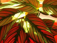 Red and Green Leaves with Backlight by Honor Kyne