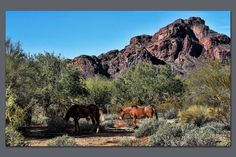 Salt River Wild Horses  http://www.facebook.com/photo.php?fbid=10200247797907605=o.338636552850689=1    Marcy Starnes