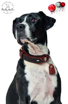 Specifically designed for large breed dogs such as Rottweilers, Saint Bernards, Mastiffs etc Exquisite, highly supple Bison Leather Built-in strain relief High level of adjustment Detachable pendant Luxury Christmas Presents, Perfect Christmas Gifts, Large Dog Breeds, Large Dogs, Rottweilers, Pitbulls, Luxury Dog Collars, Dog Bed, Bison