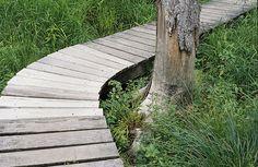 brian ferry - garden path