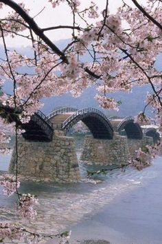 Kintaikyo-bridge thru sakura!!