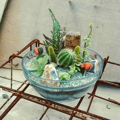 A bowl of cactus
