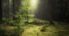 morning forest nature 4k ultra hd wallpaper