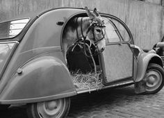 Cats and dogs aren't the only one to love Citroën! #2CV #Citroën #Donkey