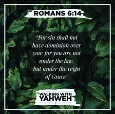 The first husband we were married to was the law, which brought about sin and death. That husband has died and we are free to marry a new Husband. Romans 6, S Word, Reign, Victorious, Christ, Law, Believe, Death, Husband
