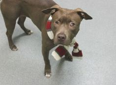 Urgent Pets on Death Row, Inc  –  LUNA  A1069301Safe - 4-11-2016 ManhattanRescue: Looking Glass Animal RescuePlease honor your pledges: https://www.facebook.com/LookingGlassAnimalRescue/