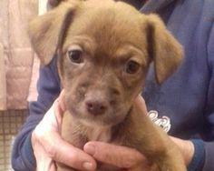 Roma: 5 CUCCIOLETTI TG MEDIO/PICCOLA: DOLCI DOLCI!: #regalo #cuccioli #cani #roma Vai all'annuncio: