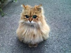 This cat has a face just like the cat on Shrek!!