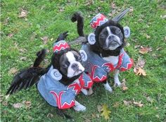 very funny doggie costumes