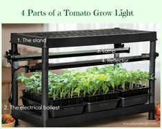 Growing Tomatoes From Seed Tomato Grow Lights for Seedlings: FAQs from Tomato Dirt - Grow lights for seedlings are an ideal way to start tomato plants. Here are the most frequently asked questions about tomato grow lights. Growing Tomatoes Indoors, Growing Tomatoes From Seed, Growing Tomato Plants, Varieties Of Tomatoes, Tomato Seedlings, Growing Tomatoes In Containers, Tomato Seeds, Growing Seeds, Grow Tomatoes