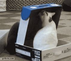 [GIF] Cat bully