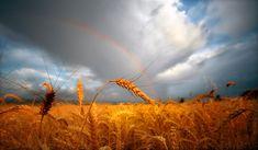 Harvest    (: