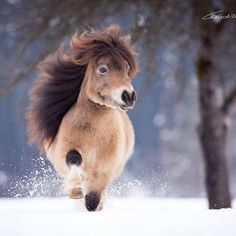 Cheval miniature - Horses Funny - Funny Horse Meme - - Cheval miniature The post Cheval miniature appeared first on Gag Dad. Most Beautiful Horses, Pretty Horses, Horse Love, Animals Beautiful, Cute Baby Horses, Cute Little Animals, Cute Funny Animals, Miniature Ponies, Cute Ponies
