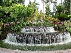 Singapore Botanic Garden-Orchidarium