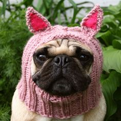 Dog Hat  Piglet Hat by jessicalynneart on Etsy, $21.00