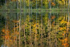 Autumn has to be painted! Credit: Patrick Pleul/AFP/Getty Images Trees reflect in the Trepliner See lake near Treplin, eastern Germany Fall Photos, Nature Photos, Movement Of Animals, Wildlife, Environment, Germany, Around The Worlds, The Incredibles, Artwork