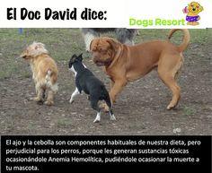 Alimentos que afectan a tu mascota. El ajo y la cebolla son altamente perjudiciales para tu perro.