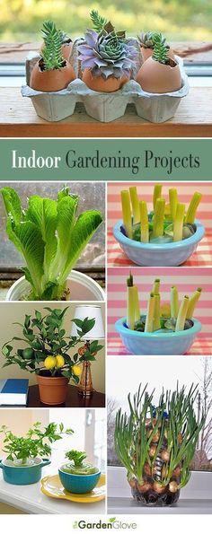 Indoor Gardening Projects • Great Ideas and Tutorials! #indoorgardenapartment