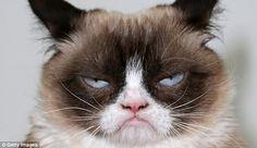Dammit, it's Monday again.