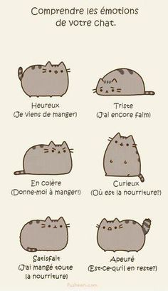 Comprendre les émotions de votre chat - & learn some new French words today.