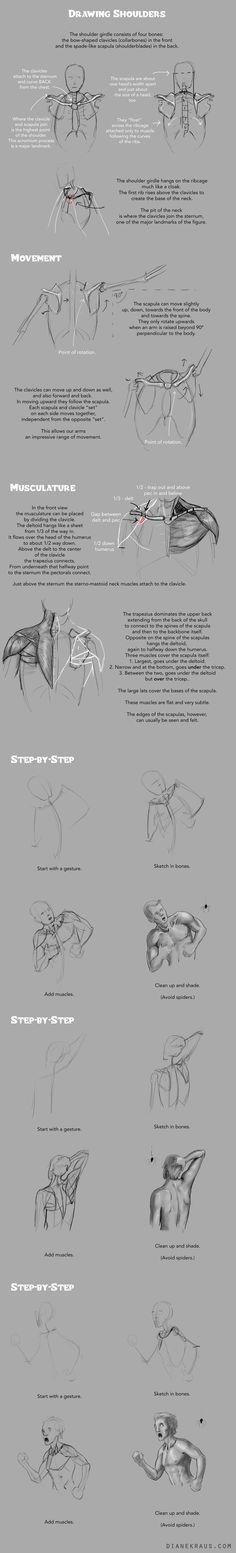 Drawing Shoulders