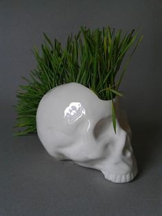 mmm may need a few of these across the kitchen window ledge - growing one of your five a day in a skull