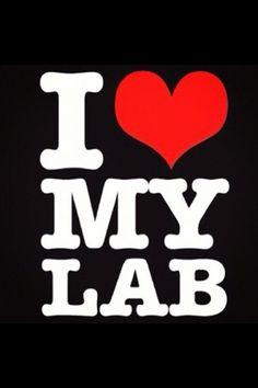 I love my black lab!!
